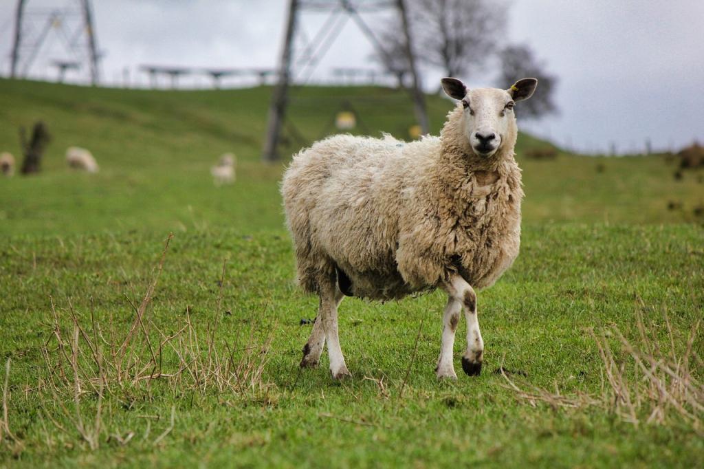 Dales wexford farm